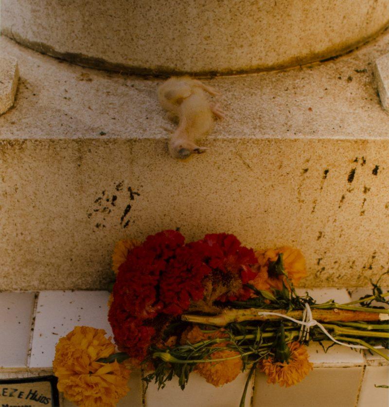 Valerie Burton, Sacrifice, Day of the Dead Oakaca, Edition 1/10, photograph, 24 x 20 inches, signed, 1996, $300 unframed