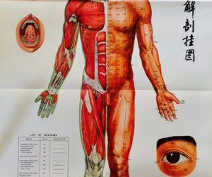 Vintage Anatomical Charts Acupuncture